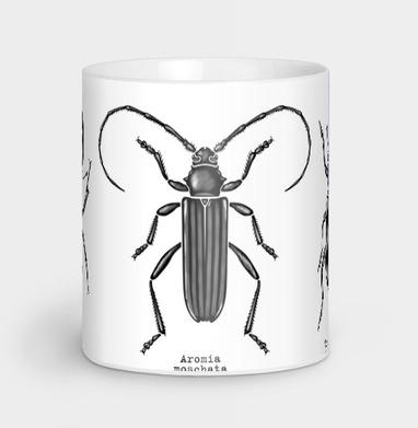 Жучары - насекомые, Новинки