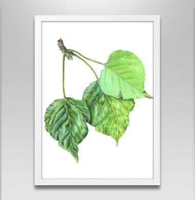 Листья тополя - Постер в белой раме, природа