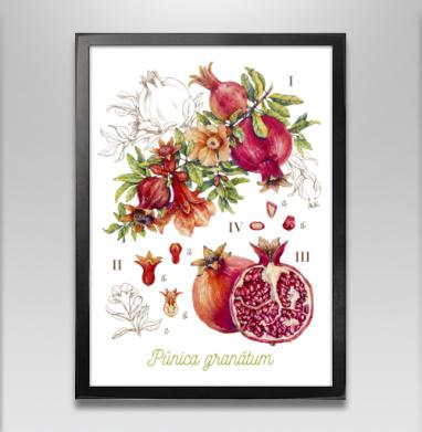 Гранат. Ботаническая акварель - Постеры, Фрукты