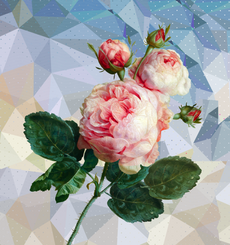 Розовая роза на геометрическом фоне - романтика - Коллекции