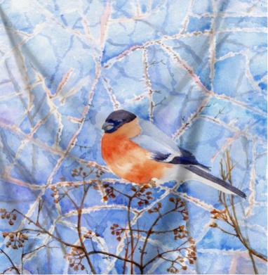 Румяный снегирь - птицы, Популярные